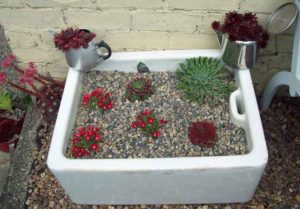 Freshly-planted Belfast sink with Sempervivum, Delosperma and Saxifraga