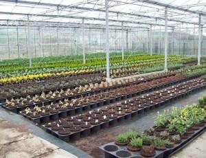 Bill Docherty's Nursery and Plant Centre