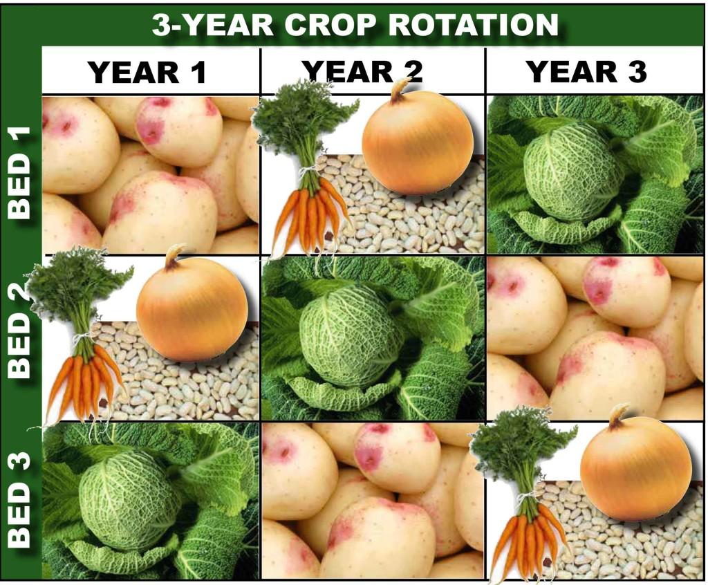 three-year crop rotation diagram