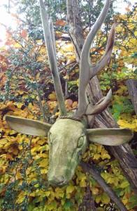 Deer head beech