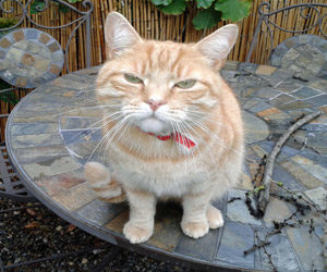 Cats and fish are especially susceptible to toxicity