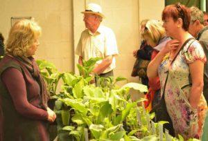Mickfield Hostas stand at the Harrogate Spring Flower Show 2015