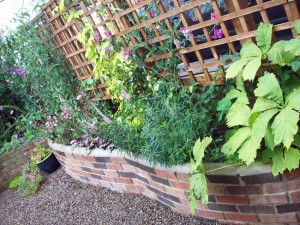 Raised bed in August