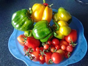 peppers, tomatoes and chillies